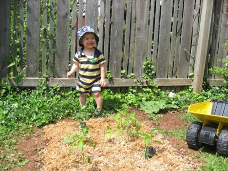 Tomato and pepper garden