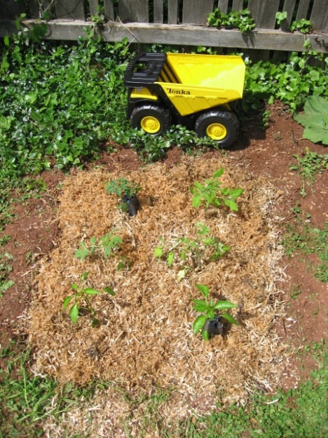 Mini garden by Tonka truck