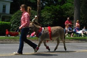 Prancing miniature donkey in PA