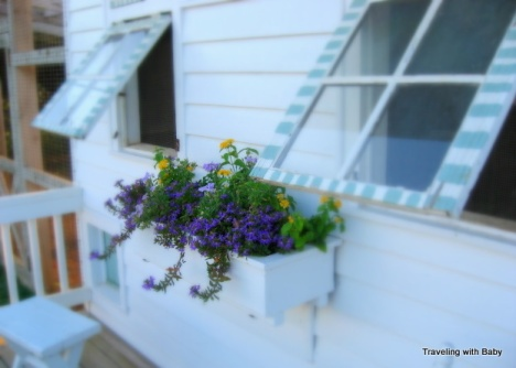 Chicken coop window box