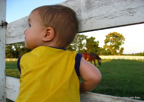 Calvin by a horse pasture near Charlottesville