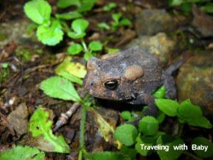TwB frog
