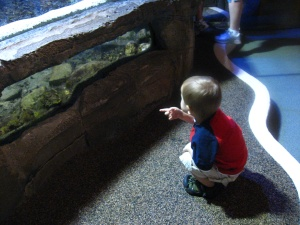 kid's eye view of a fish pond
